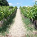 palermo wijngaard