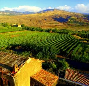 wijn sicilie