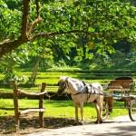 paard en kar in Sicilië